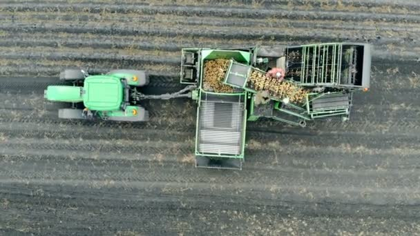 Harvesting process of potatoes held by several workers and a tractor in a top view