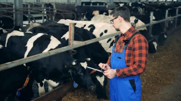 Specialista kontroly je žvýkání krávy zatímco držíte tablet