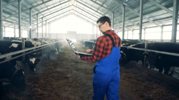 Kroutíš s krávy a mužský specialista, chodit po ní