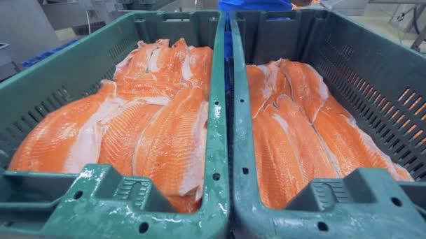 Kousky pstruhy filety jsou stále přemístěna z jedné nádoby do jiné