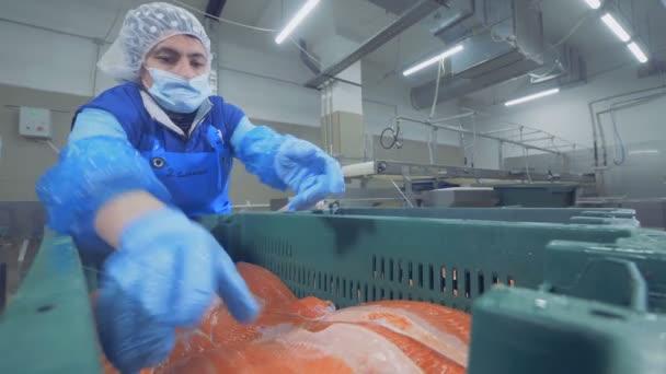 Ženské tovární dělník je dávat dohromady kmeny z lososa