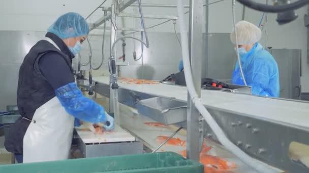 Filé ze pstruhů se stále uklízejí zaměstnanci továrny