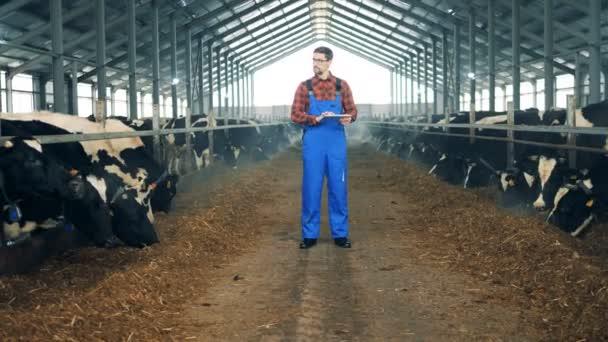 Krávy jsou jíst pod dohledem pracovníka-muže