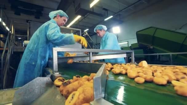 Muži pracující s bramborovými hlízami v půlce