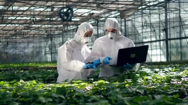 Two biologist work in a greenhouse holding tablets.