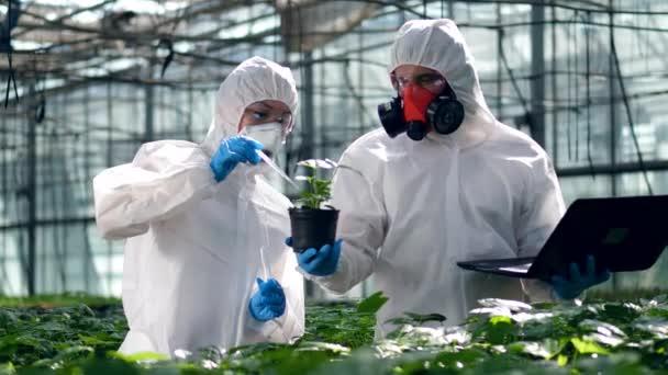 Botanikusok öntsük folyadékot egy fazékba, egy növény egy üveggyár.
