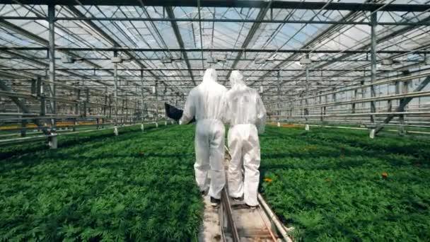 Két botanikusok séta közelében növekvő növények egy Glasshouse, ellenőrzése őket.