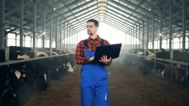 Pracovník v zemědělství používá přenosný počítač při kontrole krav v chýži.