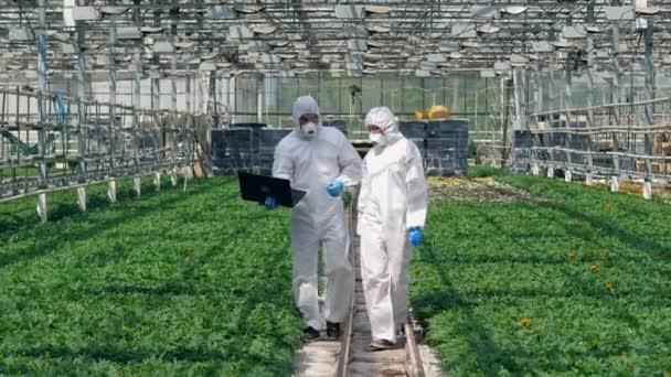Hivatásos botanikusok a növénytermesztők közelében, üvegházban.