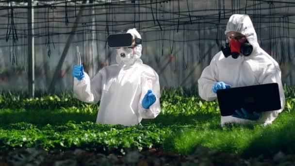 Botanikusok használata VR berendezések és a laptop munka közben a hajtások. Genetikai módosítás az élelmiszer-koncepció.