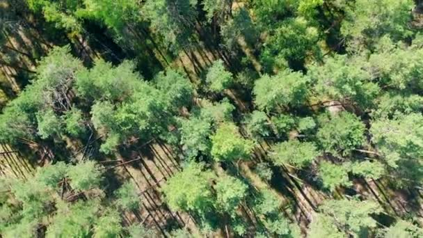 View from above of a green pine forest getting harvested