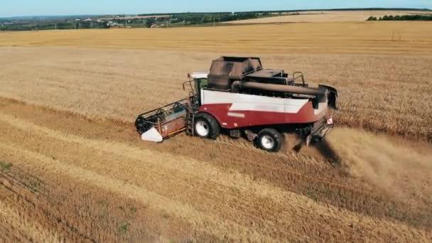 Jeden pracující kombinér orá pšenici. Koncept sklizně plodin.