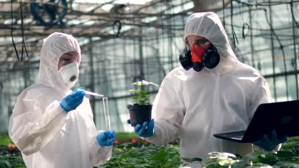 Agronomists put chemicals into a pot with plant. Scientist spraying toxic pesticides, insecticides on crop.