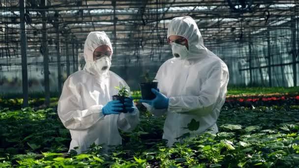 A botanikusok ellenőrzik a növényeket. Élelmiszer-termesztéssel foglalkozó tudósok.