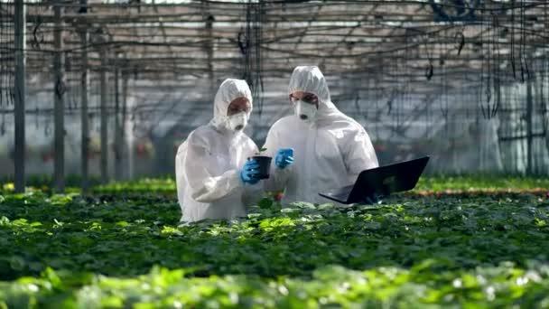 Biologové pracují s laptopem při kontrole rostlin. Vědci pracující na pěstování potravin