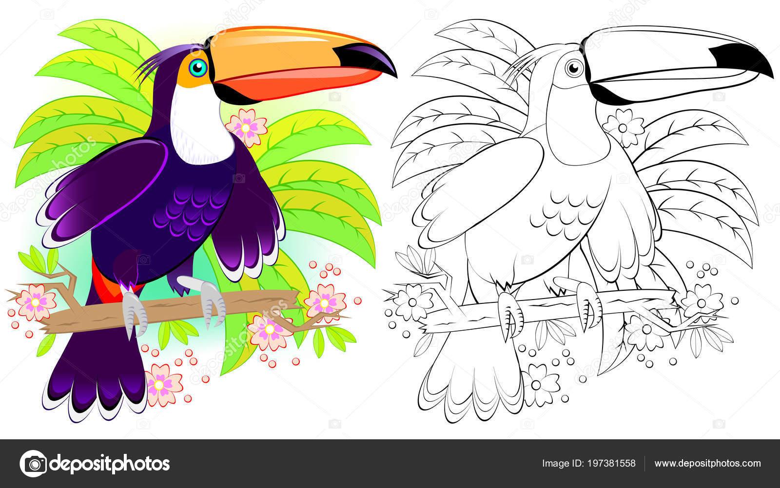Patrón Colores Blanco Negro Para Colorear Ilustración Lindo Tucán