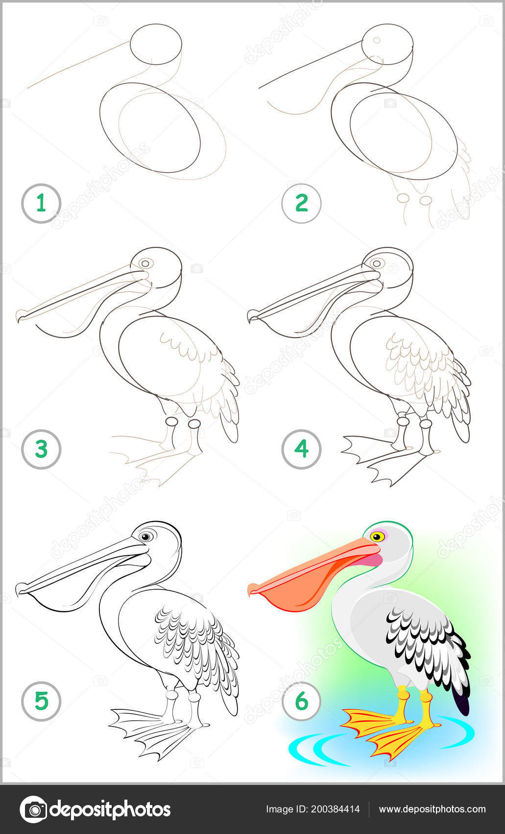 Dibujos Pelicanos Para Niños Página Muestra Cómo Aprender
