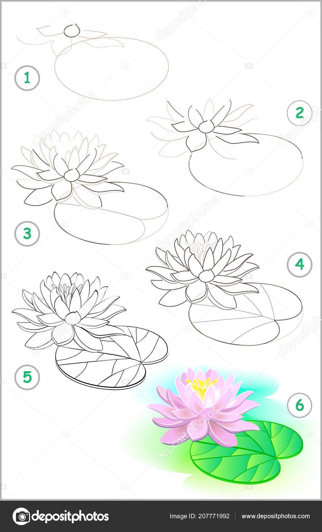 Coloriage Fleur De Nenuphar.Page Montre Comment Apprendre Etape Par Etape Dessiner Une