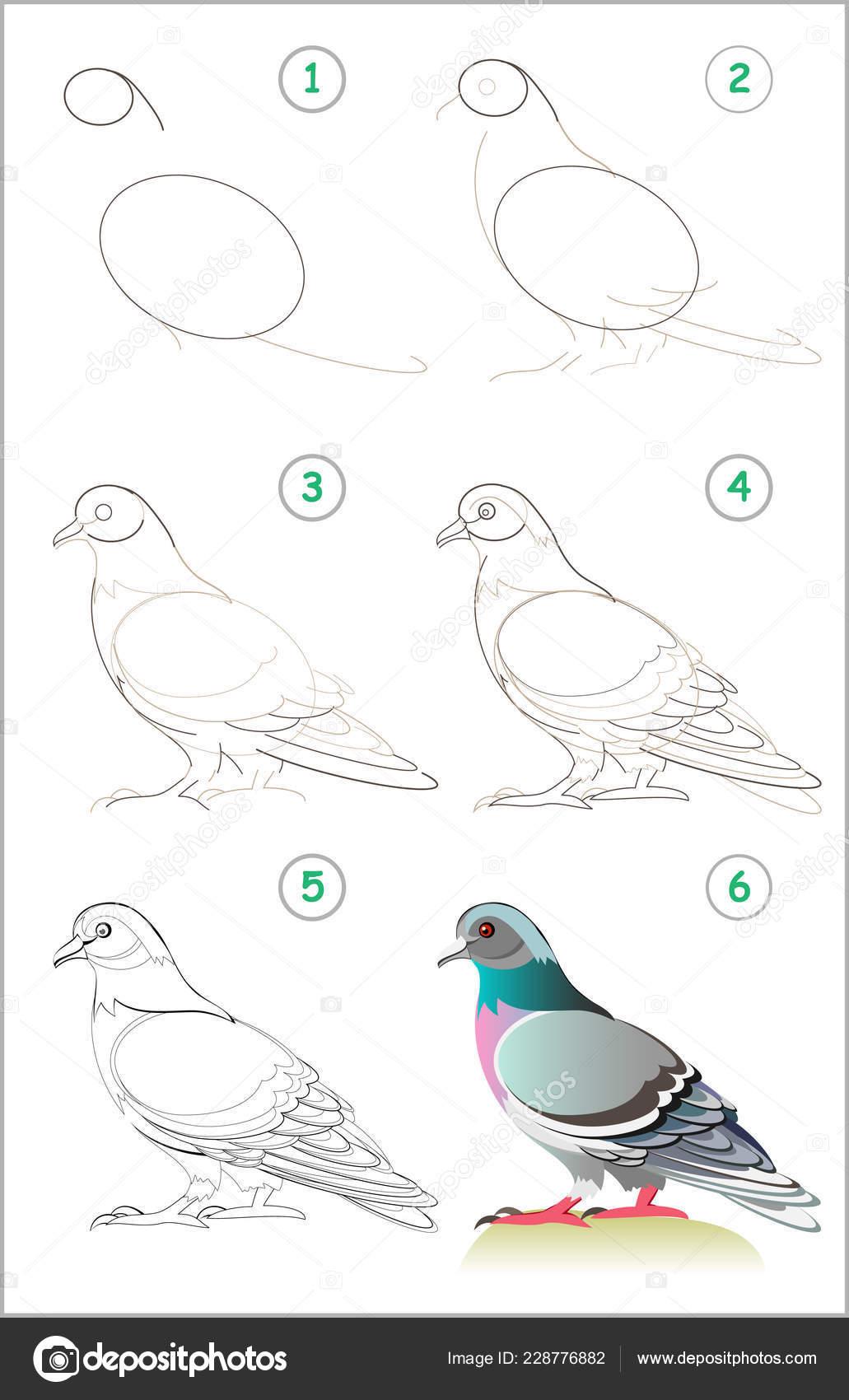 Página Muestra Cómo Aprender Paso Paso Dibujar Una Linda