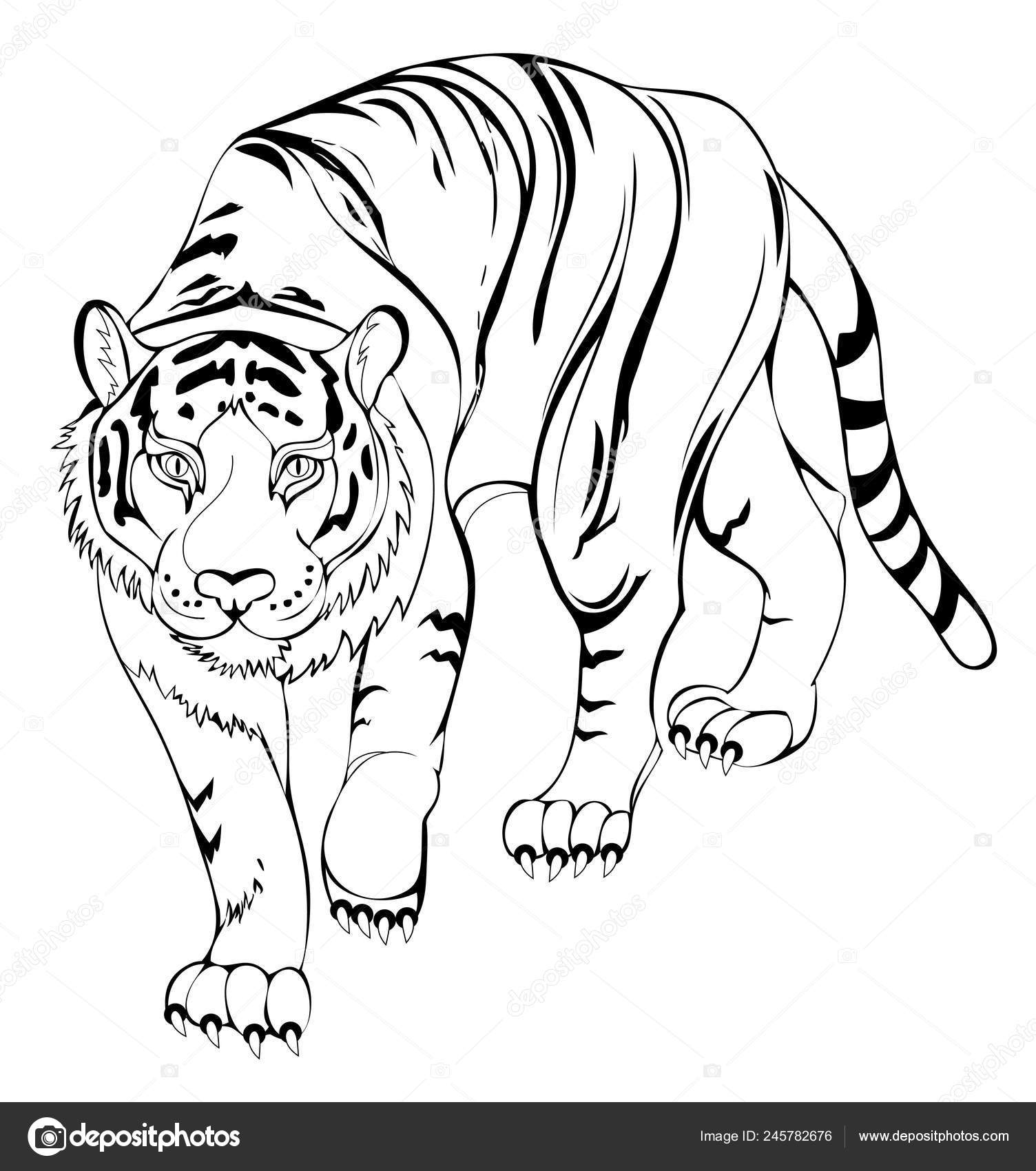 Stylized Tiger Black White Page Coloring Book Pattern Modern
