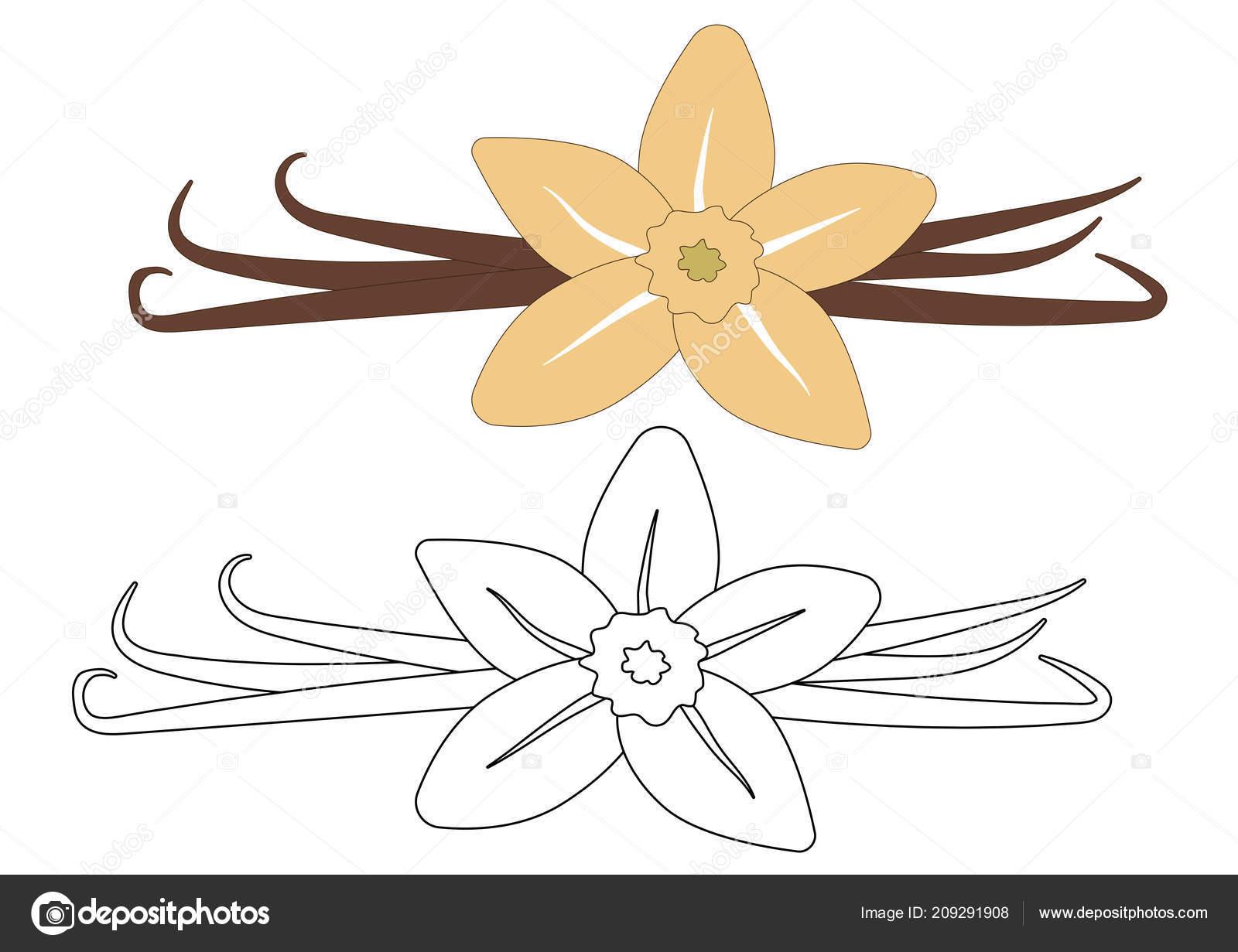 Vanille Fleurs Gousses Coloré Aux Couleurs Noirs Blancs