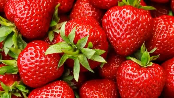 Červené zralé jahody, odrůda jahod Kimberly. Zpomalený pohyb