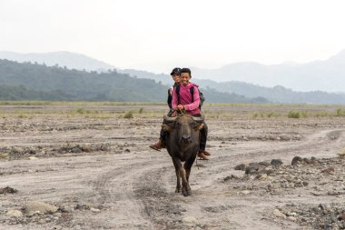 People riding buffaloes in Mt. Pinatubo, Capas, Philippines, Sep 8, 2019