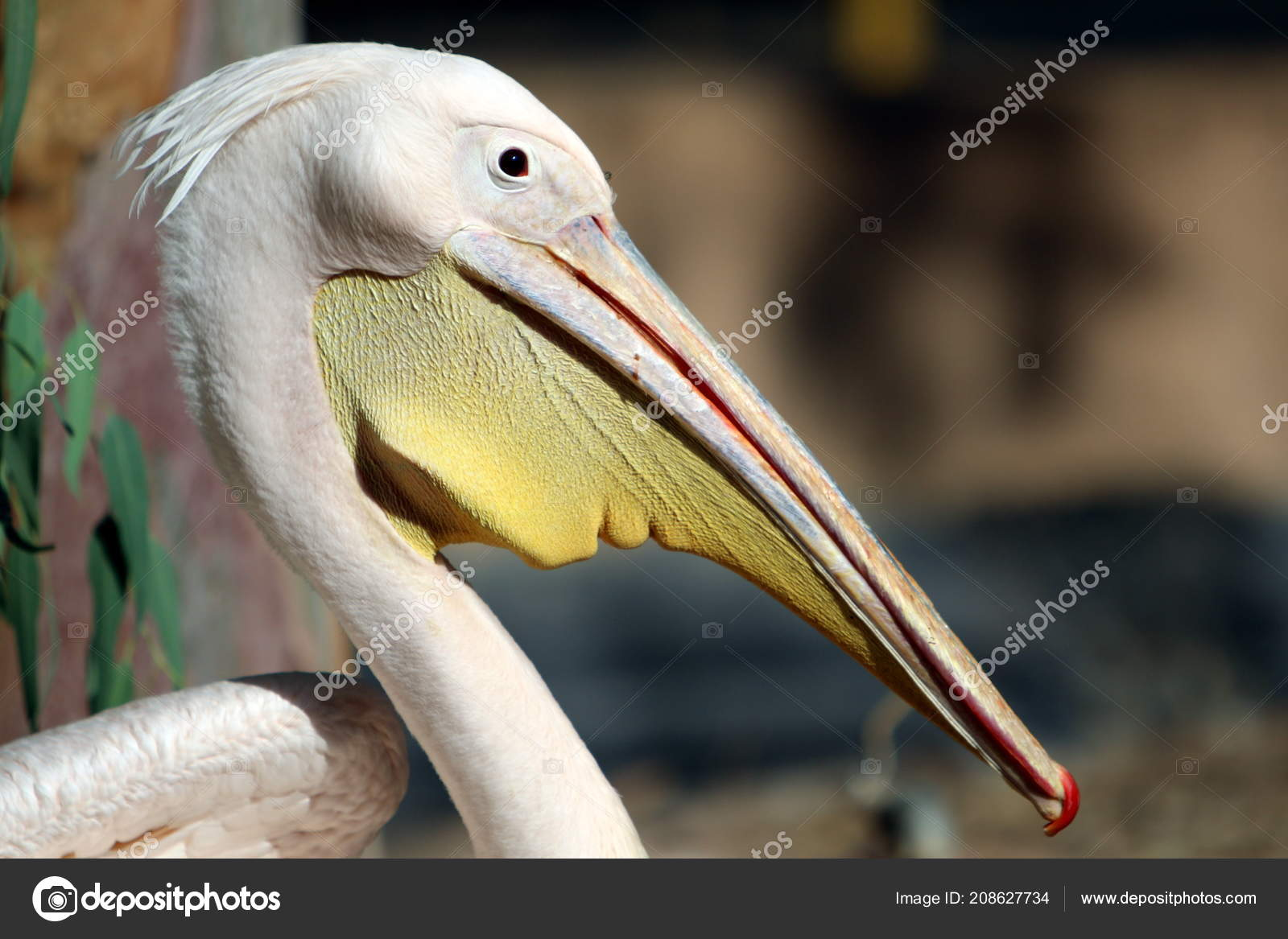 velké bílé ptáky com
