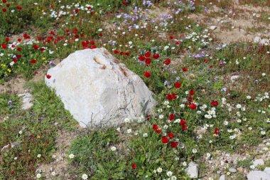 "Картина, постер, плакат, фотообои ""камни лежат в открытом парке на севере израиля постеры картины тюльпаны лотосы ретро"", артикул 253723712"