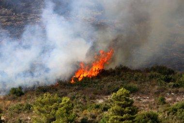 İsrail ile Lübnan arasındaki sınırdaki dağlardaki bir ormanda şiddetli bir yangın. Ağaçlar ve kuru otlar yanıyor..
