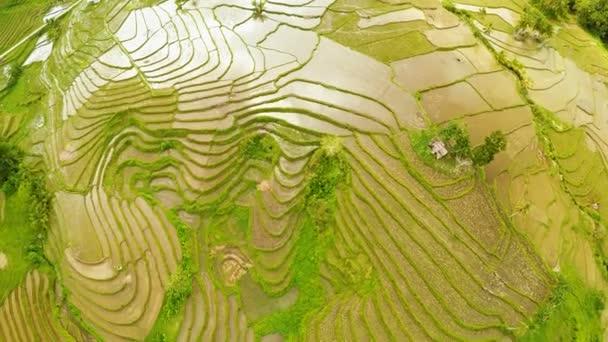 Terraced rice field in Bohol island. Philippines. Beautiful nature Filipino. Aerial views.