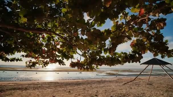 Velký opadavý strom života s červeno zelené listy v paprscích ranního slunce na exotické pláži Anda. Bohol. Filipíny. Střelba v pohybu.