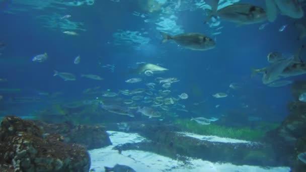 Akvárium s rybami a žraloky