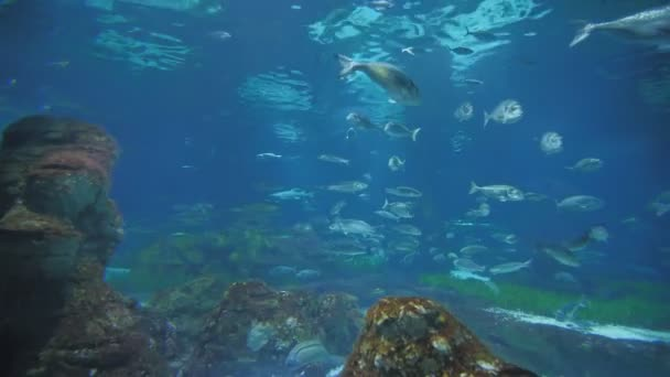 Aquarium with fish and sharks.