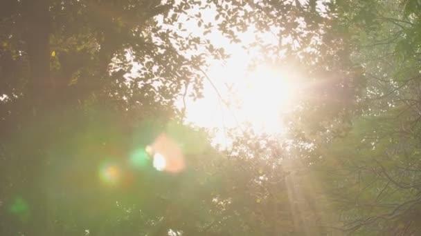 Sluneční paprsek se vede skrz stromy v městském parku.