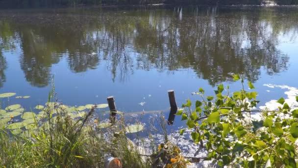 Malé lesní jezírko. Starý rybník klidné