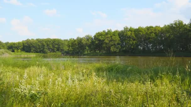 Vista del lago piccola foresta