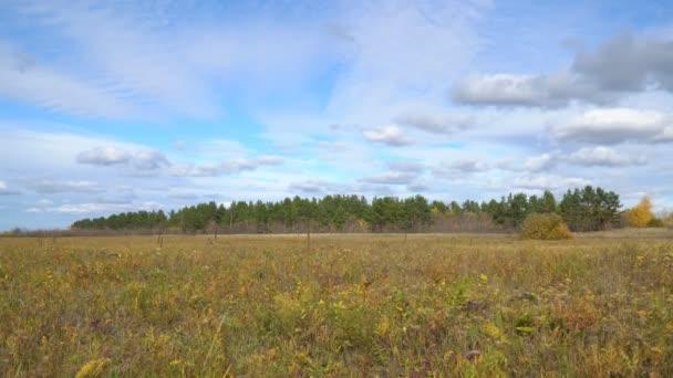 Podzimní louce před borovým lesem