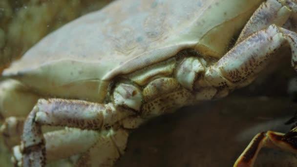 Humři, mušlí a krabů v akváriu na rybí trh čerstvý restaurace café bar