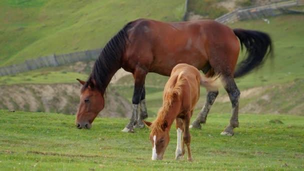 Divoké koně pastvě na hřišti v horách