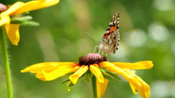 Gyönyörű pillangó egy sárga virág a kertben, nyári természet, színes lövés .