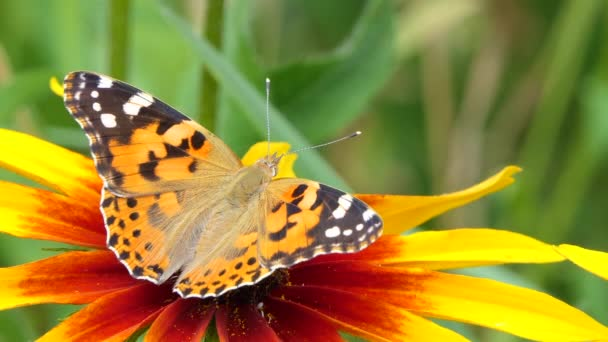 Beautiful butterfly on a yellow flower in the garden, summer nature, Colorful shot .