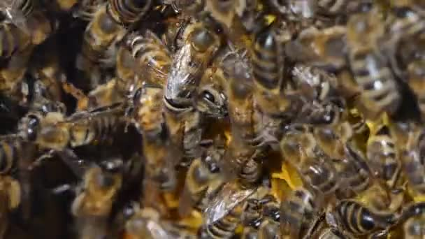 Miele naturale, lape produce cera e crea miele