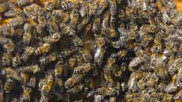 Natural Honey, Bee produce wax and create honey