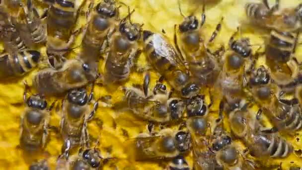 Naturhonig, Bienen produzieren Wachs und erzeugen Honig