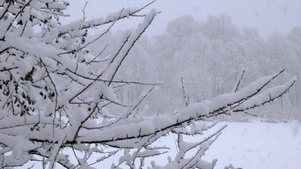V zimních vánočních sezóně padá sníh na větve stromů. Nádherná přírodní krajina