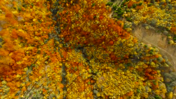 Drone flight over fall forest. Autumn leaves and trees. Orange, Red, Yellow and Green beautiful scene.