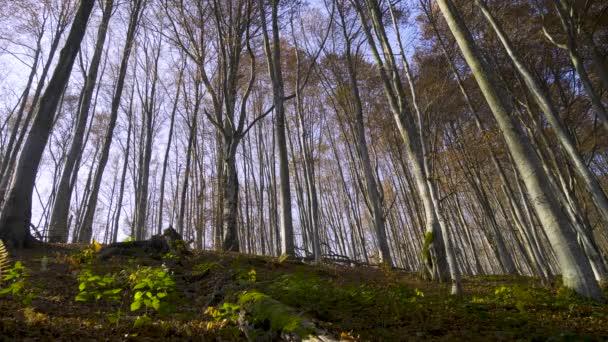 Foresta autunnale con foglie cadenti. Natura paesaggio soleggiato con alberi decidui a stagione giallo oro