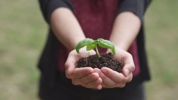 příroda, život, růst žena ruce drží sazenice