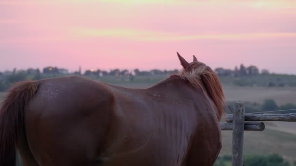 Schönes europäisches Pferd auf der Koppel bei Sonnenuntergang